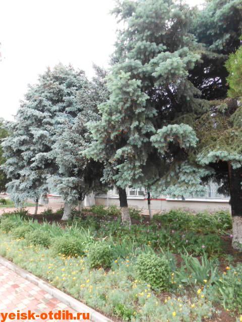 староминская тимашевская