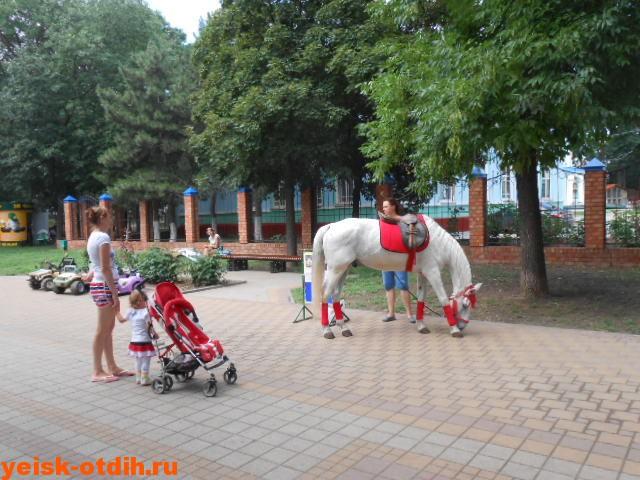 катание на лошади пони ейск