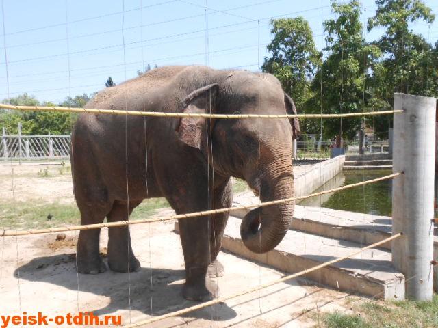 зоопарк ростов слоны