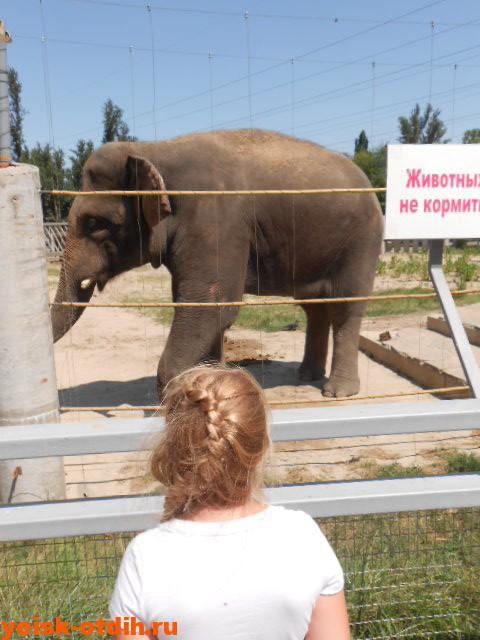 зоопарк ростов на дону слон