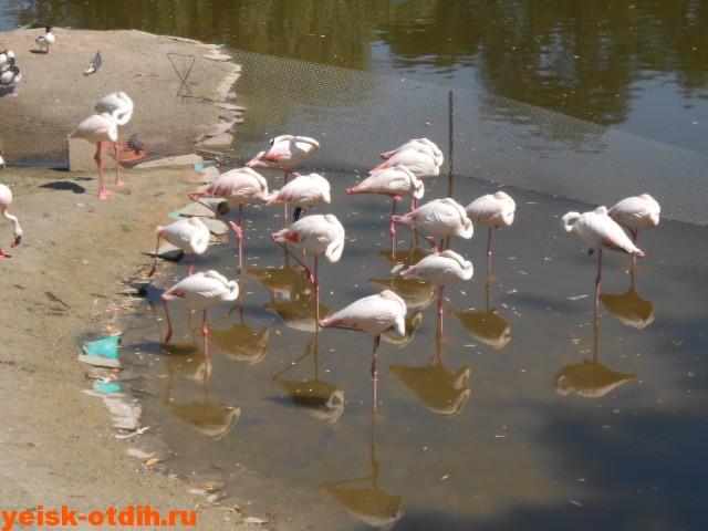 ростовский зоопарк фламинго