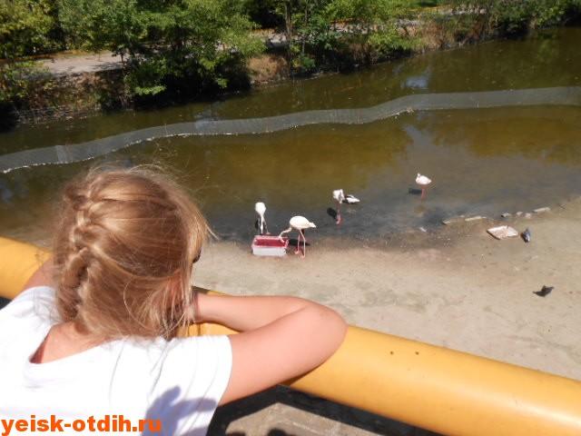 зоопарк ростов фламинго