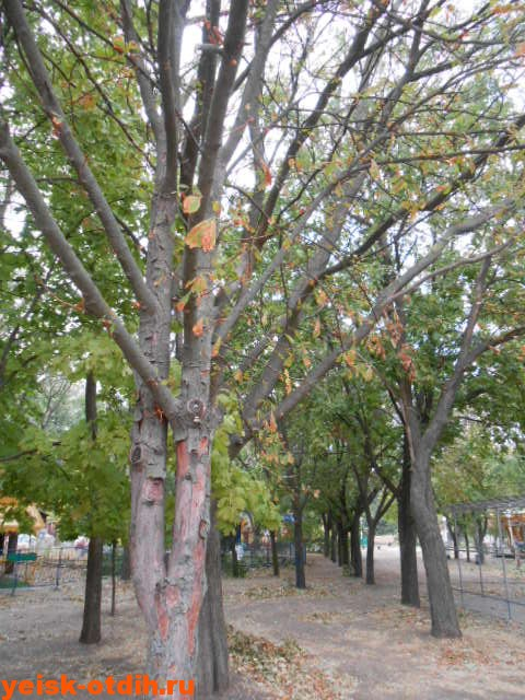 парк имени поддубного осенью
