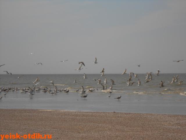 птичьи острова азовское море