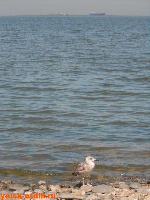 отдых в ейске на таганрогском заливе