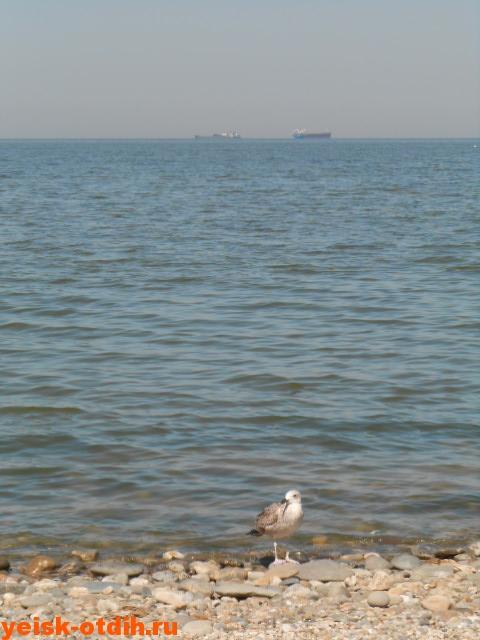 ейск таганрогский залив
