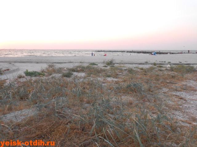 дикая природа на берегах азовского моря