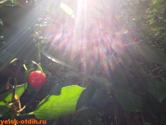 вишня в гостинице у азовского моря