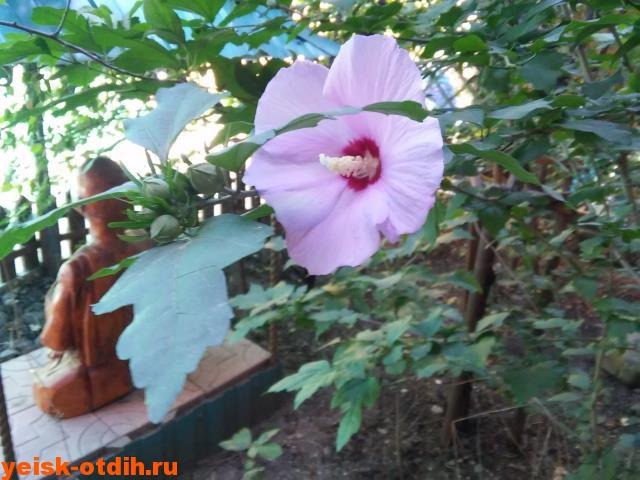 Цветы Ейск