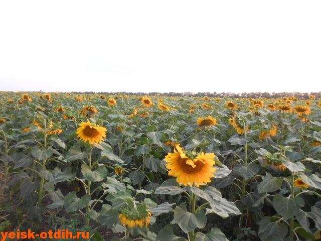 праздник урожая в ейске