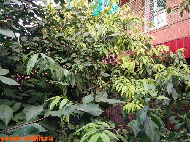 mini-gostinitsa-u-azovskogo-morya-eysk-sentyabr