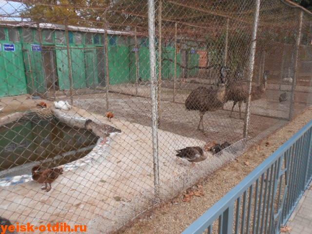 зооцентр станицы каневская