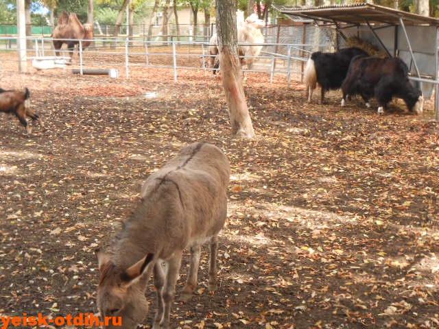 зоопарк станицы каневская