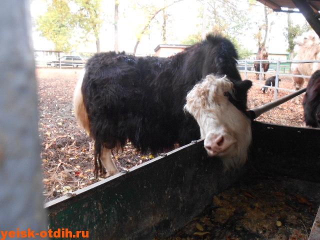 зооцентр в парке отдыха станицы каневская